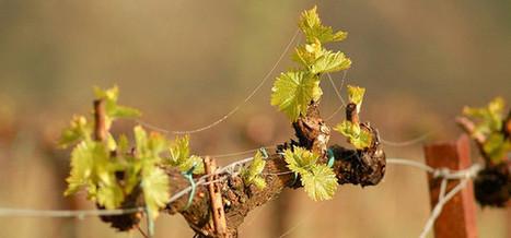 La viticulture entre dans l'ère numérique avec les vignes connectées | Le flux d'Infogreen.lu | Scoop.it