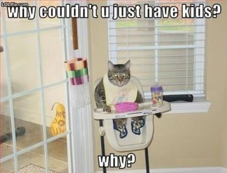 Why couldn't you just have kids? xD | Funny and crazy cats | Scoop.it