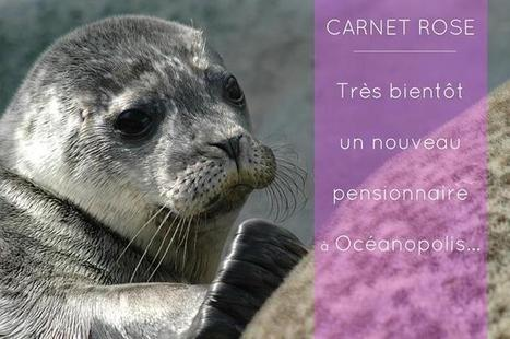 Océanopolis - Timeline Photos | Facebook | La Bretagne ça nous gagne: sorties du moment | Scoop.it