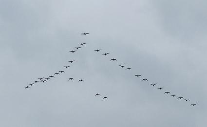 El vuelo de los gansos, por @Buenhabit | Orientar | Scoop.it