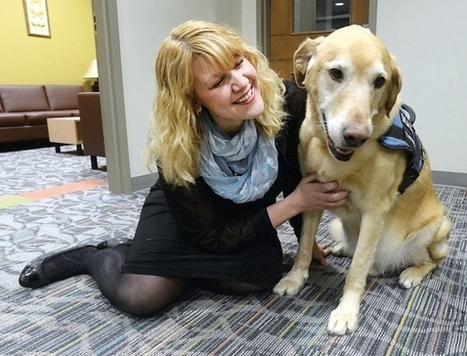 Therapy dog calming companion at trial | This Gives Me Hope | Scoop.it