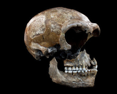 Neanderthals diet: 80% meat, 20% vegetables: Isotope studies shed a new light on the eating habits of the prehistoric humans | Aux origines | Scoop.it
