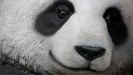 Panda 4.1 - Google's 27th Panda Update - Is Rolling Out | Real SEO | Scoop.it