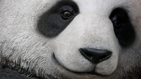 Bản cập nhật lần thứ 27 của Google vừa ra mắt: Panda 4.1 | Diễn đàn SEOMxh | Scoop.it