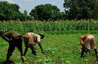 Campagne agricole saison sèche 2013-2014: Relever le défi «faim zéro» et réduire la pauvreté rurale « A La Une « Burkina24 – L'Actualité du Burkina 24h/24 | SécuriteAlimentaireSahel | Scoop.it