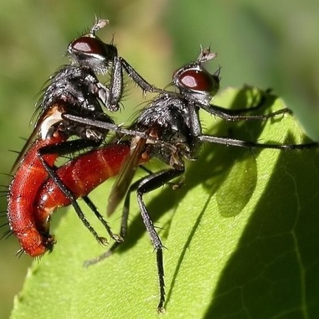 Same-sex mating among insects is accidental, researchers say | Photographers and Photographs | Scoop.it