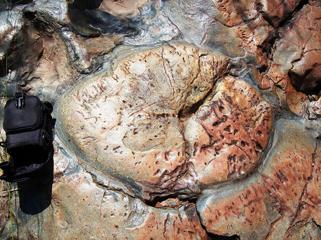 Earth's Oldest Life? Probably Not, New Study Says...   Geology   Scoop.it