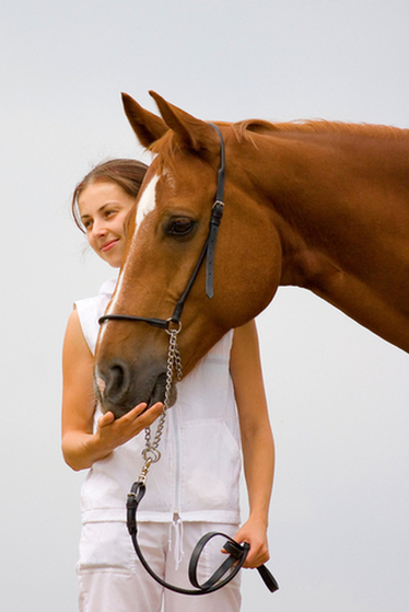 Study Shows Human Leadership Traits Improve by Working with Horses | Knowledge Sharing | Scoop.it