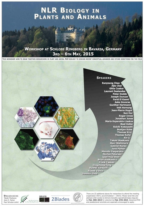 NLR Biology in Plants and Animals - Interactions, Bavaria, Germany from May 3–6, 2015 | Effectors and Plant Immunity | Scoop.it