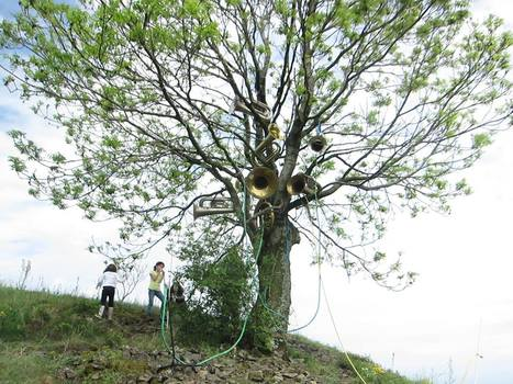 L'arbre à sons | DESARTSONNANTS - CRÉATION SONORE ET ENVIRONNEMENT - ENVIRONMENTAL SOUND ART - PAYSAGES ET ECOLOGIE SONORE | Scoop.it