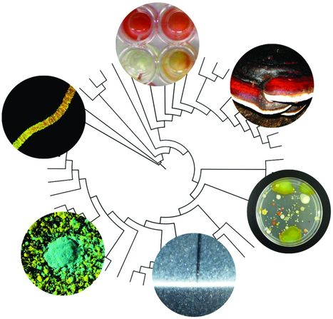 Microbiomes in light of traits: A phylogenetic perspective | mikrobiologija | Scoop.it