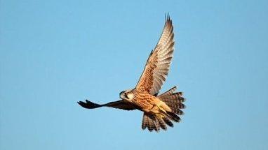 Les oiseaux et les humains partagent les mêmes gènes pour s'exprimer | Les Mots et les Langues | Scoop.it
