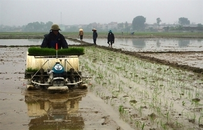 Launching the Rice Model Farm in Thanh Hoa Province | DuPont ASEAN | Scoop.it