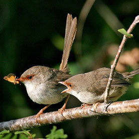 Wrens Teach Eggs To Sing | You Can't Make This Stuff Up | Scoop.it