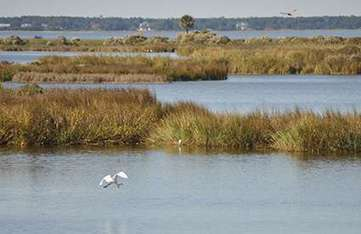Coastal wetlands save hundreds of millions of dollars in flood damages during hurricanes | Sustain Our Earth | Scoop.it