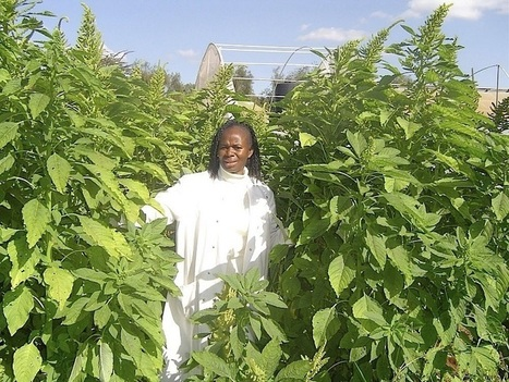 Warrior Queens Battle For Africa's Food Future | Seed Freedom | Friday:  Think About It. | Scoop.it