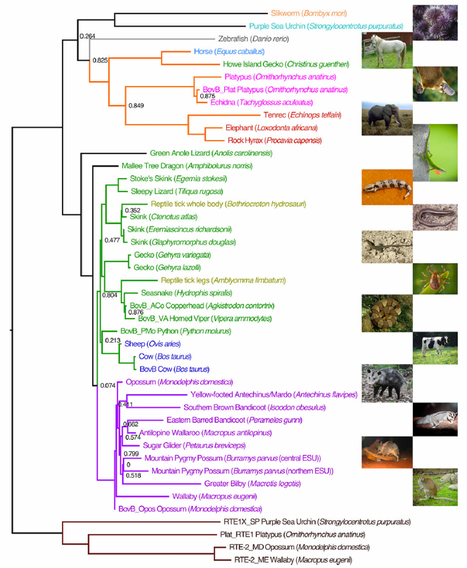 Humans have alu, cows have BovB. Why is a quarter of the cow genome similar to that of snakes?   Amazing Science   Scoop.it