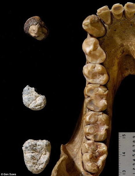 Gorilla fossils show we split from the great apes 10 million years ago   Oceans and Wildlife   Scoop.it