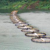 La production de l'aquaculture va dépasser celle du bœuf   Alimentation   Scoop.it