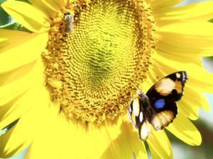 Honeybees 'stressed, overworked' - IOL SciTech | IOL.co.za | Food issues | Scoop.it