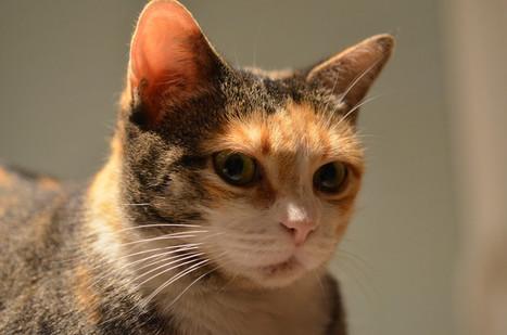 Quimper : condamné pour avoir tué son chat dans une machine à laver - Société - MYTF1News | CaniCatNews-actualité | Scoop.it