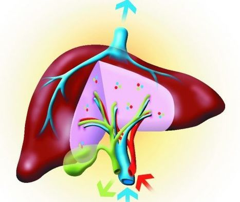 Study reports liver donors face mortality risk with LDLT - from News-Medical.Net - News-Medical.net   Organ Donation & Transplant Matters Resources   Scoop.it