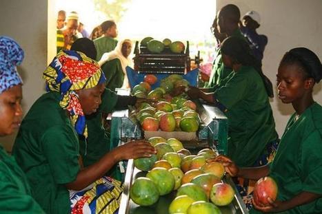 Un meilleur accès au crédit stimule la production agricole au Mali   Questions de développement ...   Scoop.it
