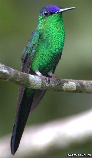 Species count put at 8.7 million | VCE Biology | Scoop.it