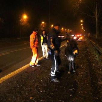 Pont-à-Celles: quand deux ânes se baladent sur l'A54... | PAC dans la presse ... | Scoop.it