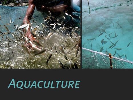 L'aquaculture, qu'est-ce que c'est ? : Geo.fr | aquaculture en grèce | Scoop.it