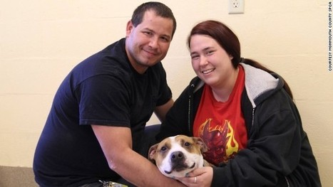 Lucky dog reunited with family after separation in Superstorm Sandy | The Animal-Human Bond | Scoop.it