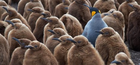 6 Uncommon Virtues That Make Great Leaders a Rare Breed | management | Scoop.it