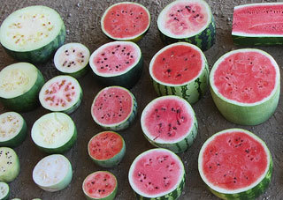 Watermelon genome gives clues to disease resistance, plant vascular system - UC Davis | Plant Genomics | Scoop.it