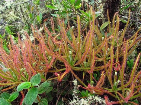 Where are new species found? - AoBBlog | Erba Volant - Applied Plant Science | Scoop.it