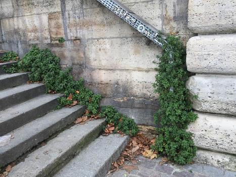 Goulotte végétale – Paris côté jardin | ville et jardin | Scoop.it