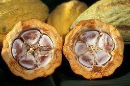 Côte d'Ivoire : Des producteurs demandent une hausse du prix garanti du cacao - Afriquinfos | Banania Split | Scoop.it