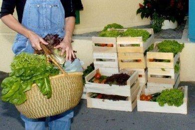 Les Amap d'Aquitaine se fédèrent en collectif régional | Agriculture en Gironde | Scoop.it