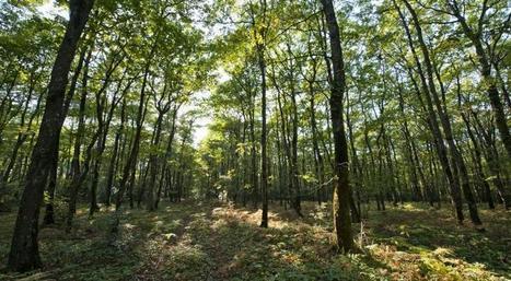 Graines et plants forestiers : conseils d'utilisation des ressources génétiques forestières | Alim'agri | Veille Scientifique Agroalimentaire - Agronomie | Scoop.it