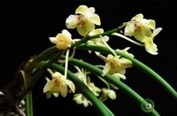 Nouvelles espèces de faune et flore découvertes au Vietnam -- Vietnam+ (VietnamPlus)   Réseau Tela Botanica   Scoop.it