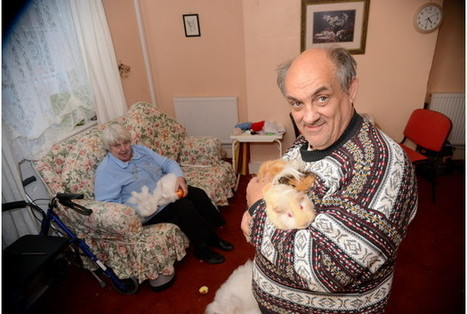 Plymouth couple face eviction over 'psychic' guinea pigs | Quite Interesting News | Scoop.it
