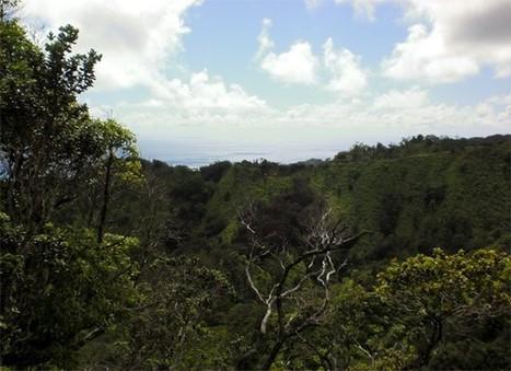 Isso é o fim: Ilhas do Havaí estão se dissolvendo, segundo cientistas   21 de dezembro de 2012   Scoop.it