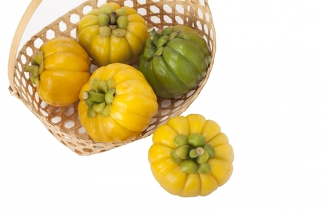 Garcinia Cambogia - Myth Or Magic? Here Are The Amazing Benefits For You | Health | Scoop.it