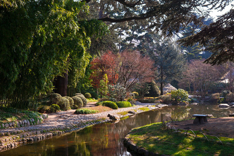 The world of Albert Kahn: the Japanese garden | Japanese Gardens | Scoop.it