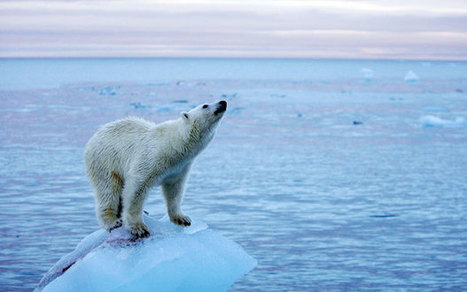 Global warming impacts 'severe, widespread, and irreversible', UN warns | ESRC press coverage | Scoop.it