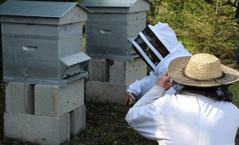 Périgueux rêve de produire son propre miel | Ag