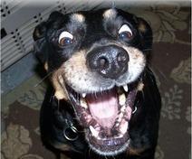 Les expressions faciales | Dog Behavior | Scoop.it