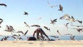 UVioO - Crazy Bird Prank!!   Humor   Scoop.it