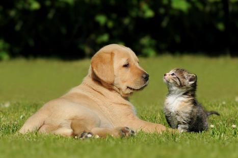 Protection Santé pour votre chien / chat immédiate et jusqu'à 100 %   Protection Santé   Scoop.it