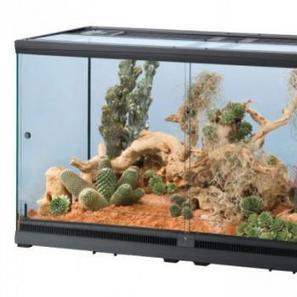 Aménager son premier terrarium | Animalerie en ligne | Scoop.it