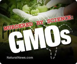 Top ten ways humanity is being murdered in the name of 'evidence-based science' (#1 GMOs)   Jordan's MPA   Scoop.it